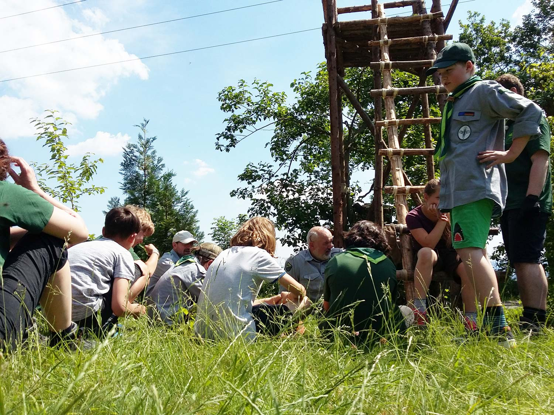 Turmbau der Sippen Brasselbären und Luchse